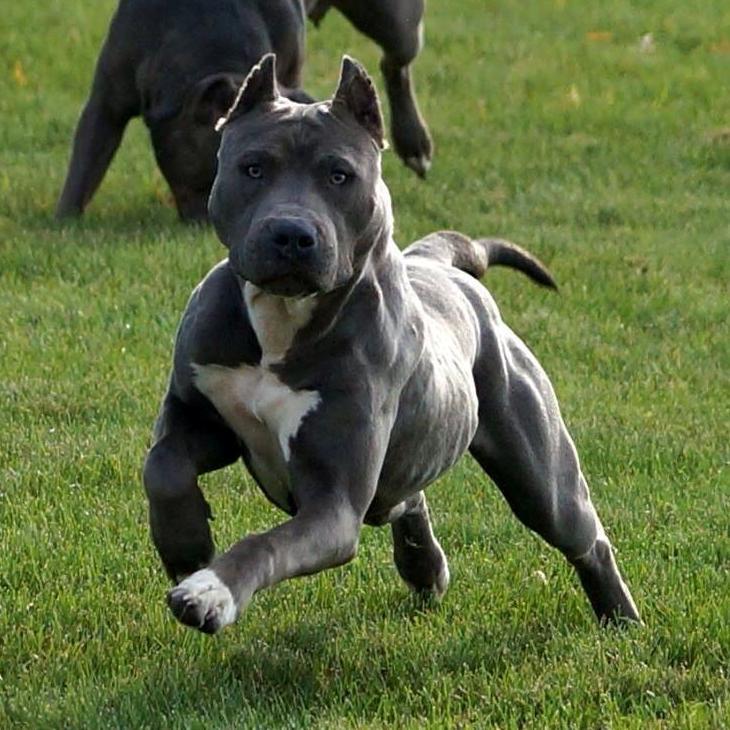 Ukc Dog Breeds List